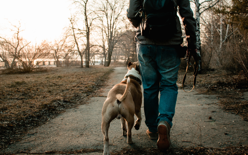 5 Awesome Hiking Trails You & Your Dog Will Love | DC Fray