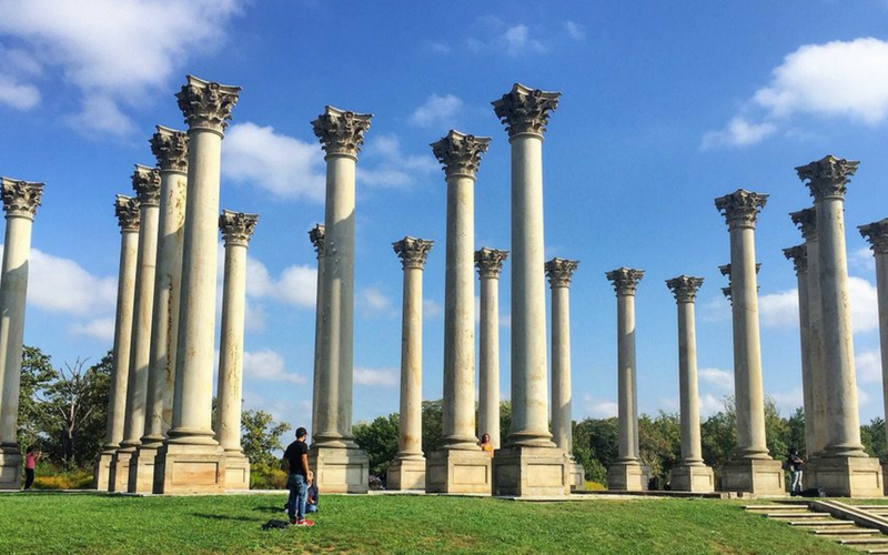 6 Surprising Things To Do At The National Arboretum Dc Fray